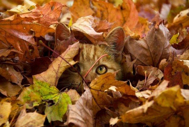 Анекдоти на 16 жовтня навчать вас знаходити позитив у всьому