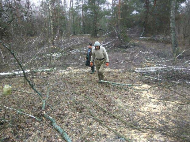Вырубка лесов, фото: Государственная экологическая инспекция Украины