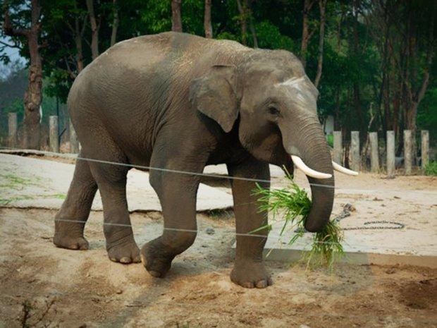 Очманілий слон показав нахабним туристам їх місце: пішли геть, людиська