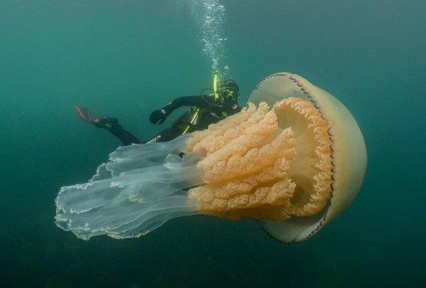 Гігантський монстр до смерті перелякав дайверів: після такого назавжди перехочеться занурюватися на глибину