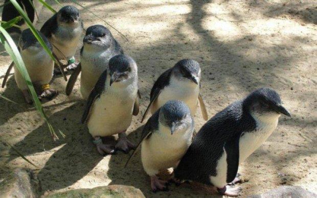 ШОК! Человечество уничтожит редких нелетающих птиц