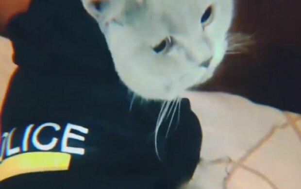 Кот-полицейский, скриншот: Instagram