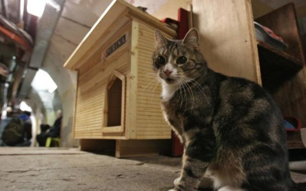 Всесвітній день кота: топ-професій пухнастиків, про які ви не здогадувалися