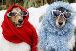 Позаботимся о братьях наших меньших: как и во что одеть домашних питомцев в холодный период