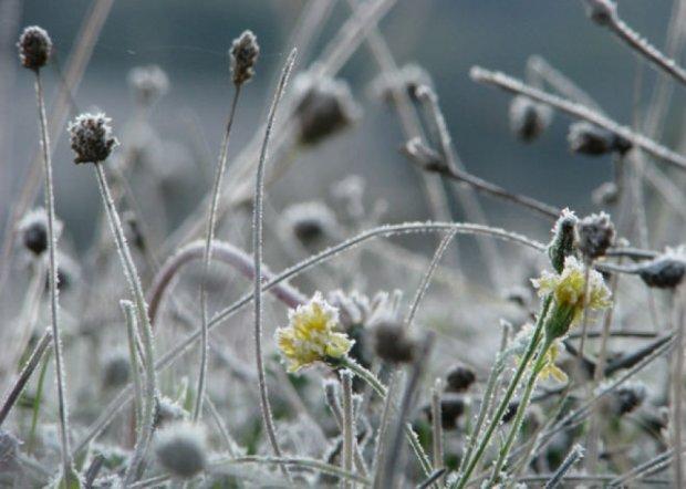 В Украине ожидаются заморозки до -3 градусов