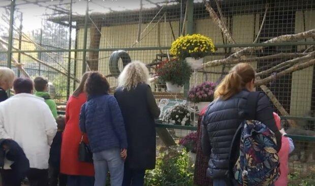 В зоопарке Кернеса массово рожают мавпочки