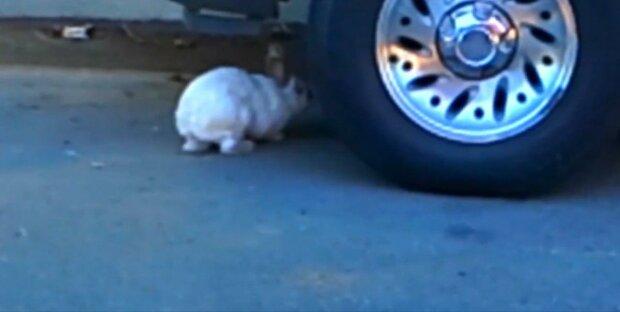 Запоріжжям ганяє дикий заєць - вухатий причарував усе місто і накивав лапками