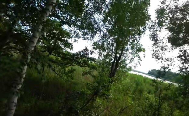 Чернобыльский лес, скриншот: YouTube