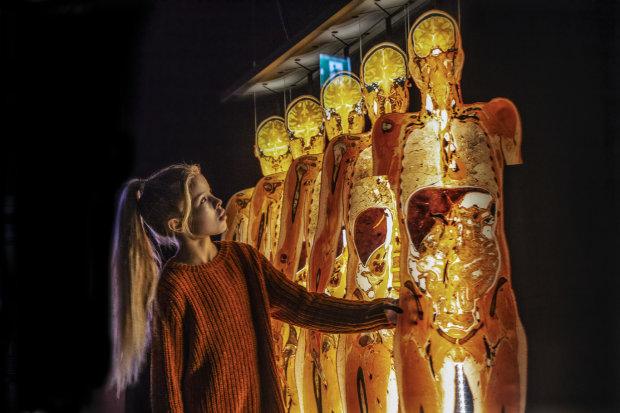 """В Киев впервые привезут уникальную выставку человеческих тел: посмотрите на себя """"изнутри"""" - билеты уже в продаже"""