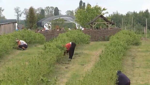 Поляков ждет голодный год без украинских заробитчан, урожай соседей под угрозой