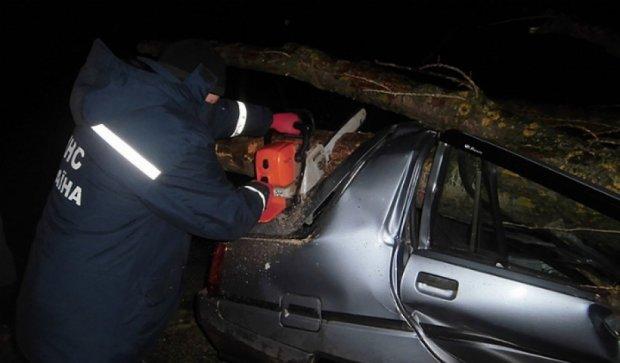 Повалене дерево ледь не вбило трьох людей (фото)