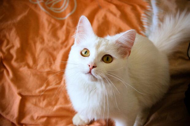 кошка, фото pxhere