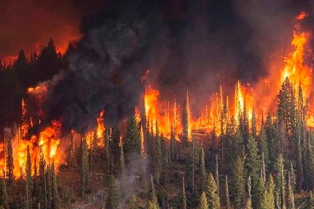 """Пожежі в Сибіру розлютили Собчак, Слєпакова і Галкіна: """"Хто обі*рався, сидить і мовчить"""""""