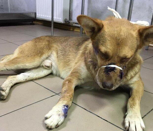 """В Запорожье медики второй раз возвращают малыша к жизни - """"Натравливали бойцовского пса"""""""
