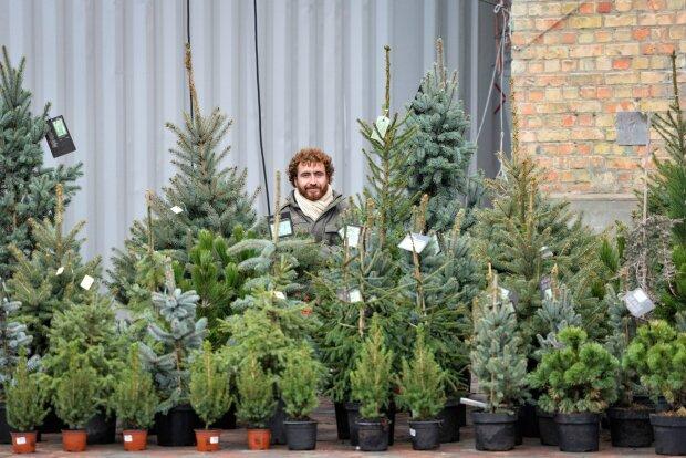 Продажа елок, Народная правда