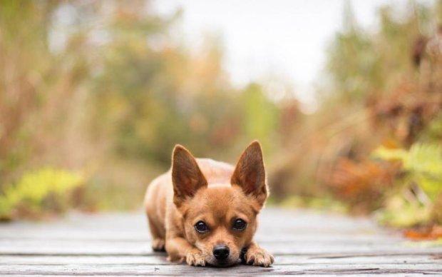Живодер жестоко покалечил невинного пса вилами: фото 18+