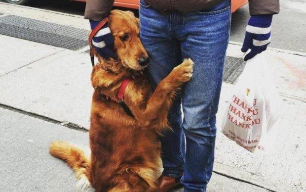 Собака-обнимака заработала для хозяина 45 тысяч долларов
