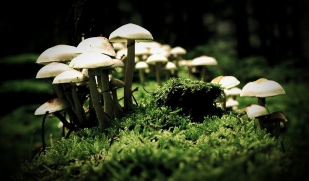 Галюциногенні гриби зцілюють від невиліковної депресії