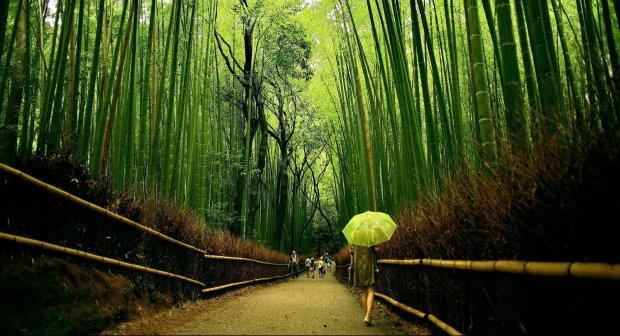 Невероятные леса нашей планеты, похожи на инопланетные пейзажи: когда заблудиться одно удовольствие