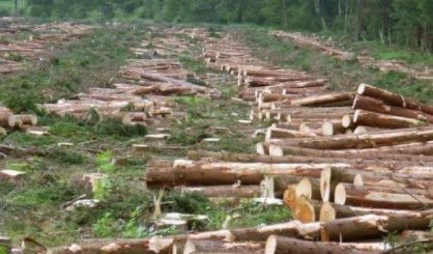 Украина варварски вырубает леса и парки