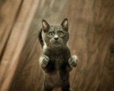 кішка, фото: Life