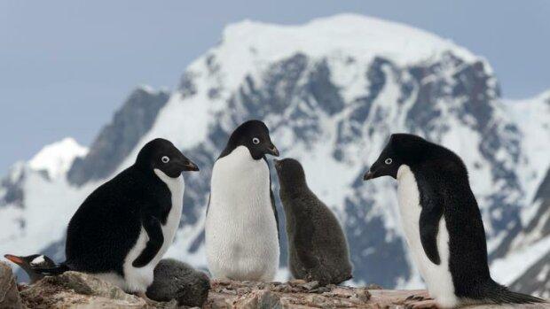 пингвины, фото из свободных источников
