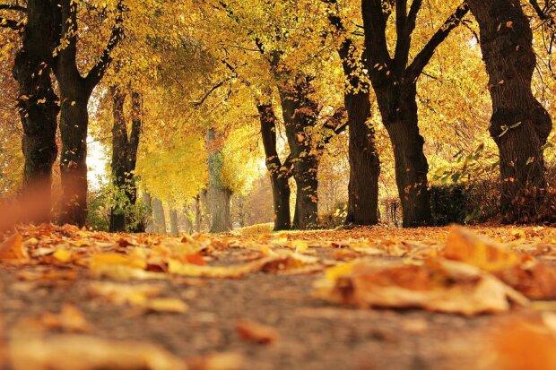 Днепряне, айда в парк: синоптики порадовали прогнозом на 13 октября