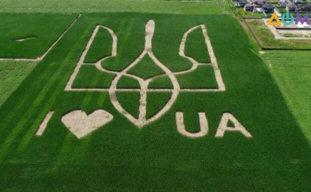 На Киевщине посреди поля появился огромный Герб Украины: видно даже с самолёта