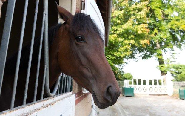 Перед французькими барами не можуть встояти навіть коні