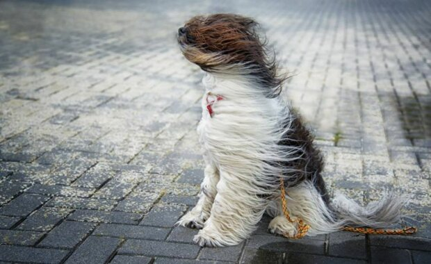 Погода на завтра: синоптики предупреждают украинцев об опасном дуновении ветра