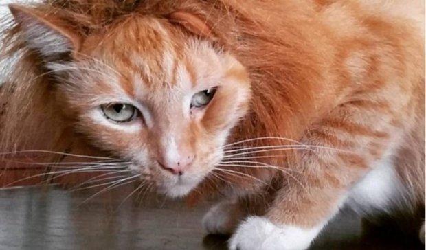 Кот-клептоман Ниндзя задаривает хозяев ворованными вещами