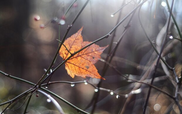 Погода в Ивано-Франковске 16 ноября: стихия оставит город без солнца