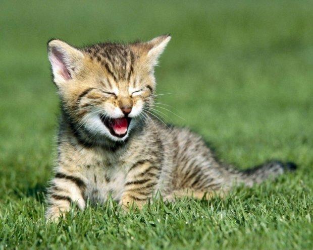 Анекдоти на 30 листопада змусять вас зустріти зиму з посмішкою