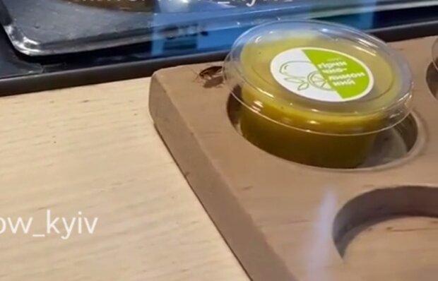Таракан на прилавке, кадр из видео