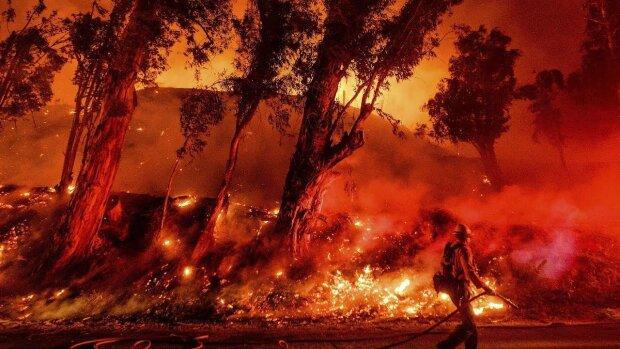 Пожежі в Австралії, фото: ua.112.ua