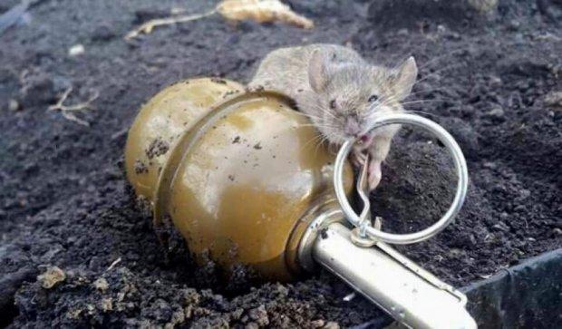 Бойова миша бійців АТО підкорила мережу