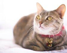 кішка, фото: alev.biz