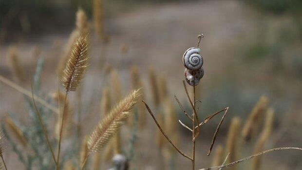 Між осінню і зимою: синоптики озвучили дивний прогноз для Вінниці на 4 січня