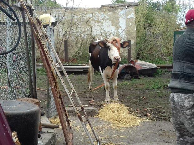 """Шахов показал последствия коммунального террора """"Нафтогаза"""": пенсионеры поселились в сарае с животными"""