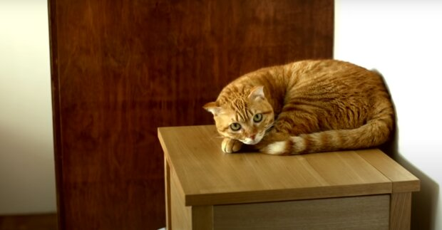 Кот, скриншот из видео