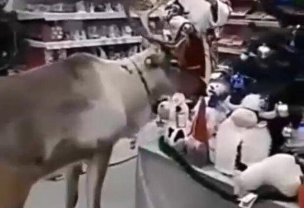 Олень у магазині, скріншот відео