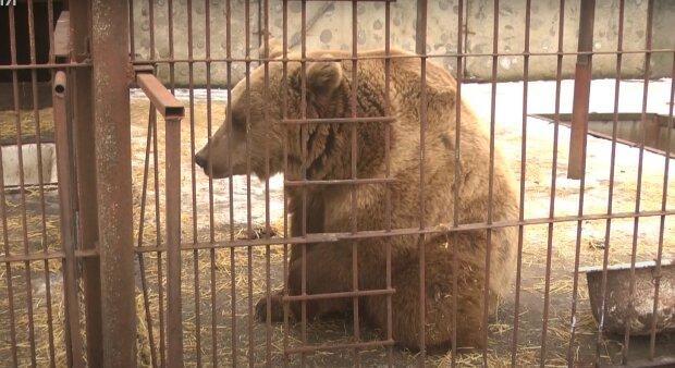 Медведь, скриншот из видео