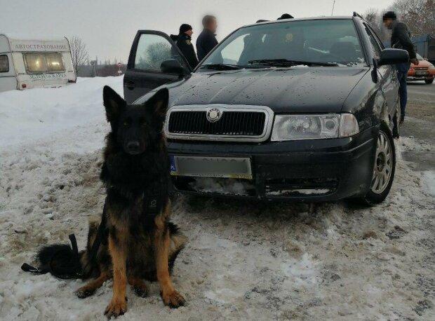 """Винюхав цілу шкарпетку наркотиків: як на Донбасі собака """"покарав"""" зухвалого чоловіка"""