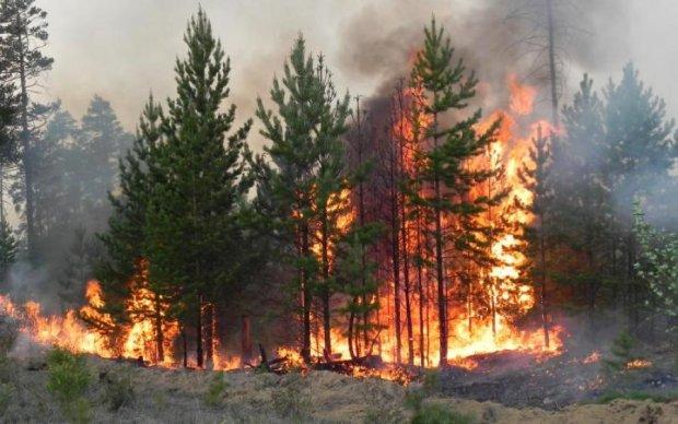 Юг Украины накрыла волна жутких пожаров