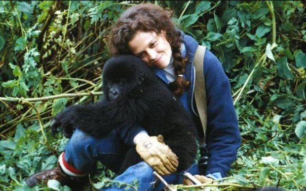 Эволюция отменяется: найдено главное отличие в развитии обезьяны и человека