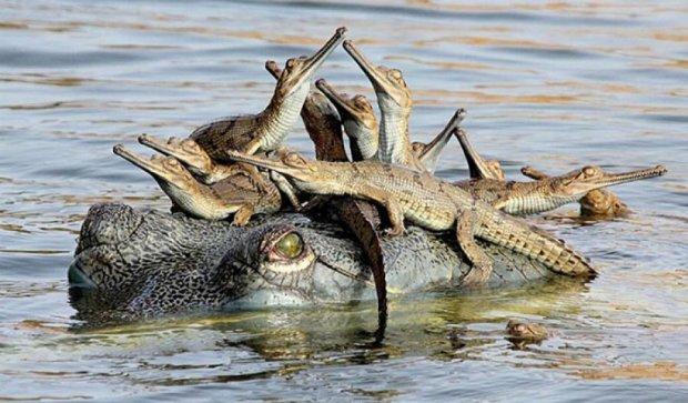 Тварини дають людям приклад батьківства (фото)