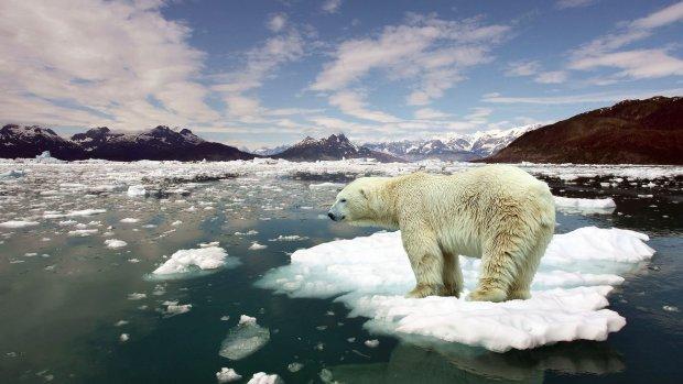 Екологи б'ють на сполох: глобальне потепління вже змінило кліматичні зони, і це тільки початок
