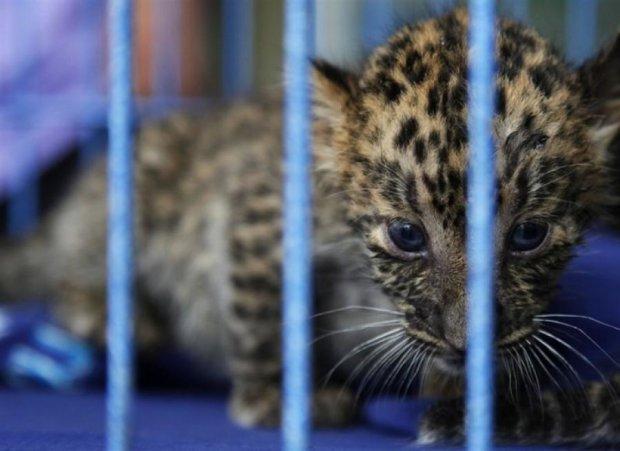 Оккупанты конфискуют зверей ялтинского зоопарка