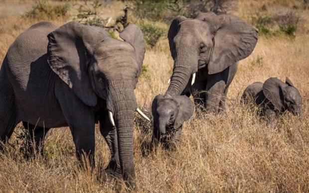 Во время охоты на мужчину неожиданно упала слониха