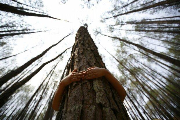 """Страшний сон Піноккіо: у Запоріжжі школярки зняли на відео чоловіка, який займався """"цим"""" з деревом"""